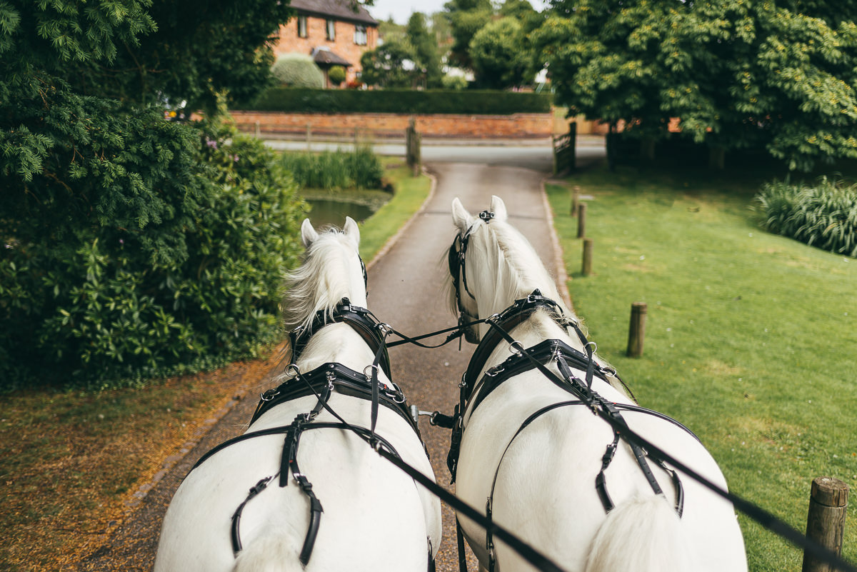 bridal carriage horses
